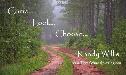 Randy Willis Newsletter | Come! Look! Choose